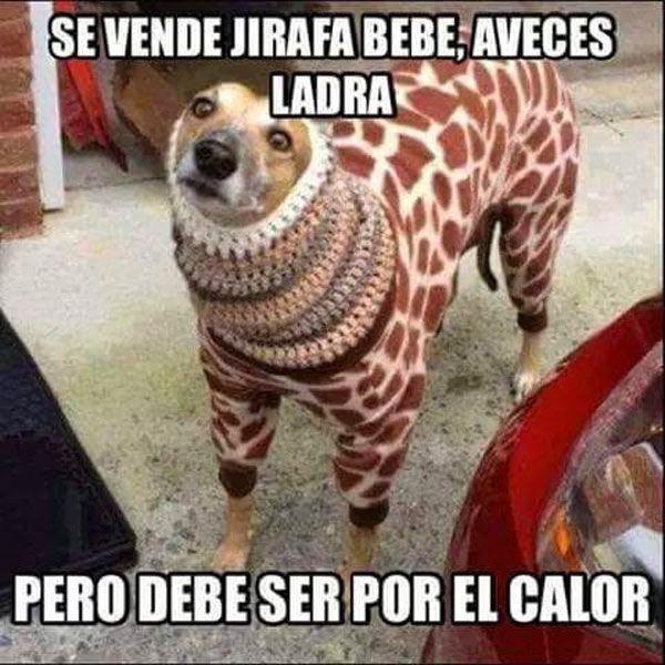 Marcianadas_168_0207151244 (59)