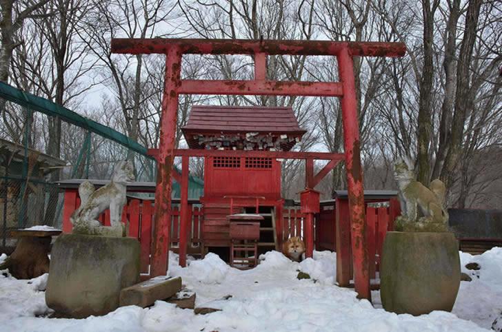 Zao Fox Village Japon (1)