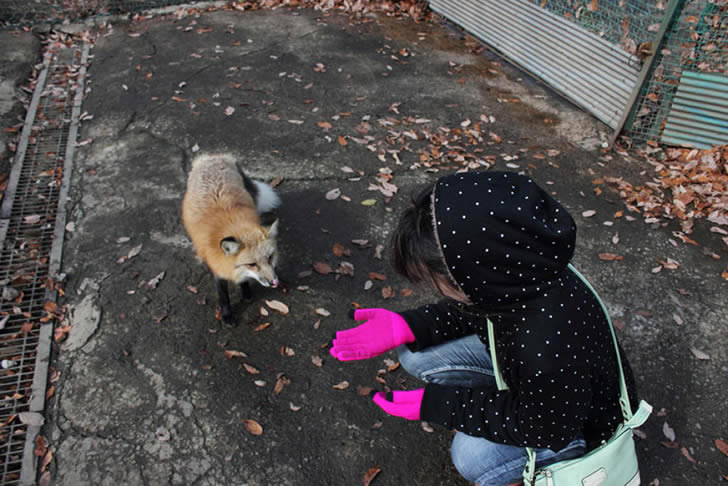 Zao Fox Village Japon (14)