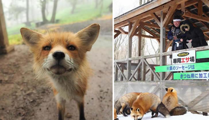 Zao Fox Village Japon (15)