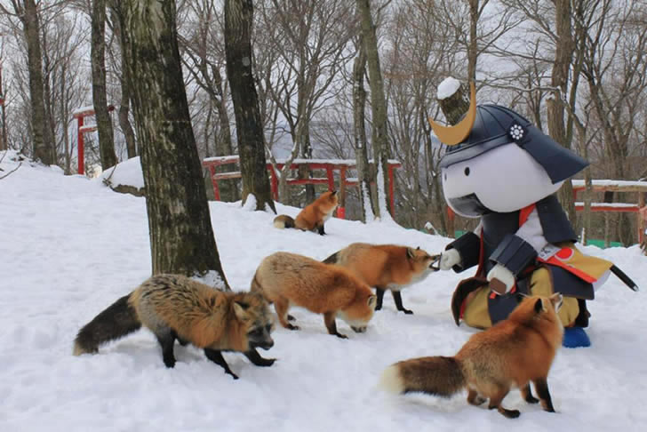 Zao Fox Village Japon (26)