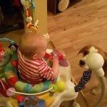 Este beagle es la niñera que todos necesitan + VIDEOS