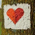¿Quién creó el dibujo que representa al corazón?
