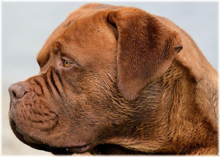 perro perfil