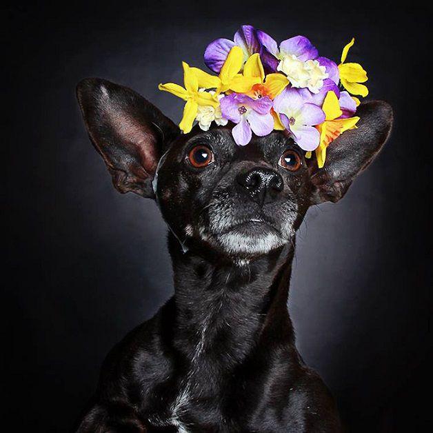 perros negros flores adopcion (1)