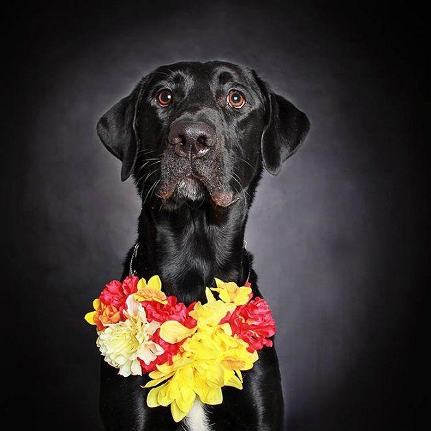 perros negros flores adopcion (2)