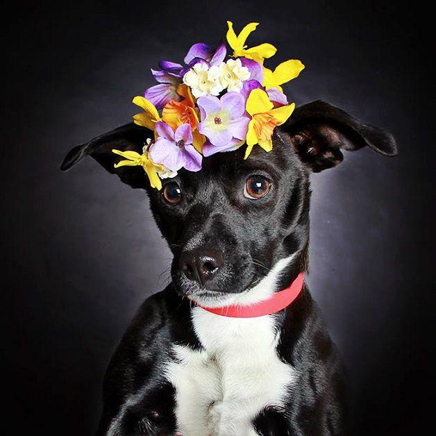perros negros flores adopcion (3)