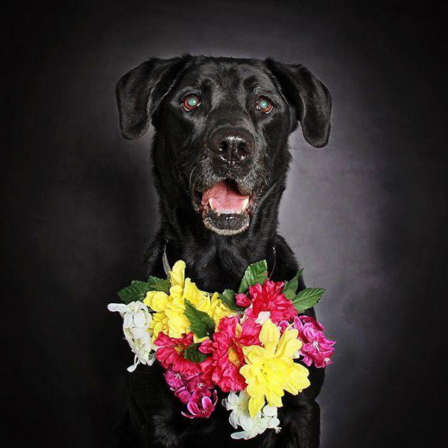 perros negros flores adopcion (4)