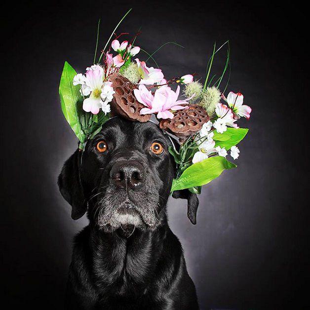 perros negros flores adopcion (5)
