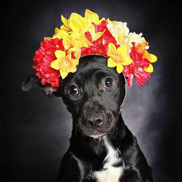 perros negros flores adopcion (6)