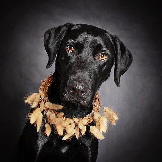 perros negros flores adopcion (7)