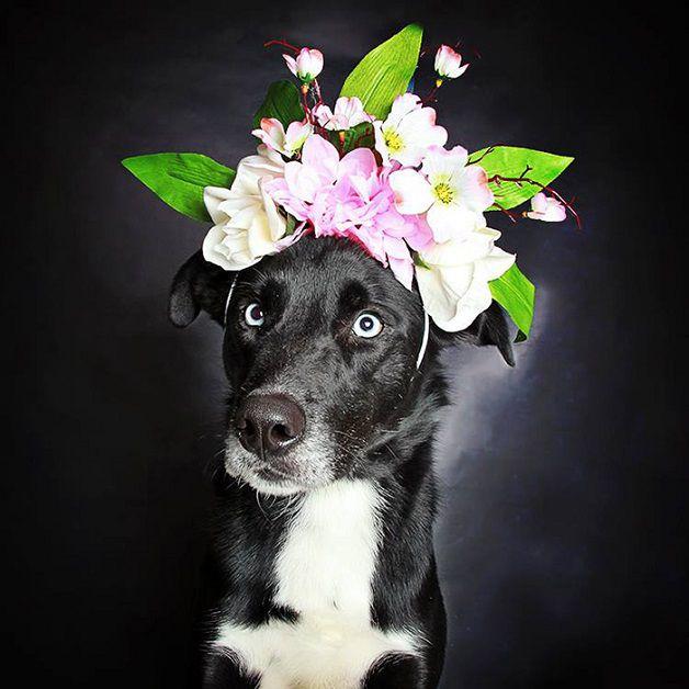 perros negros flores adopcion (8)