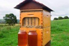 Revolución en la apicultura: sacar miel de la colmena con un grifo