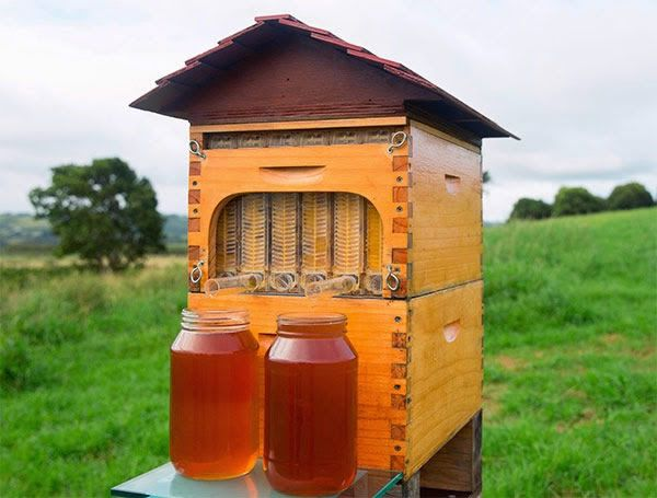 Flow Hive miel (2)