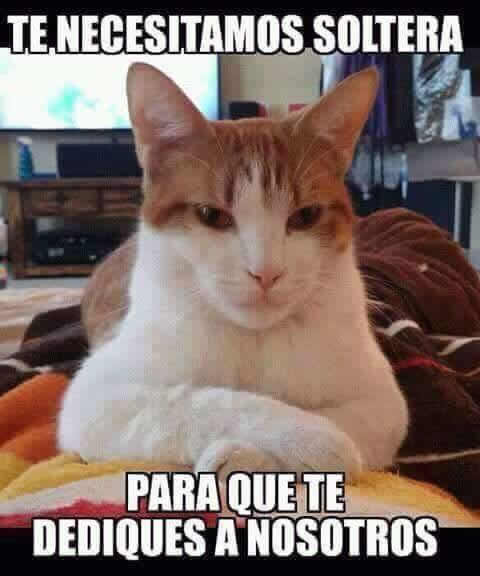 Marcianadas_172_1503271222 (142)