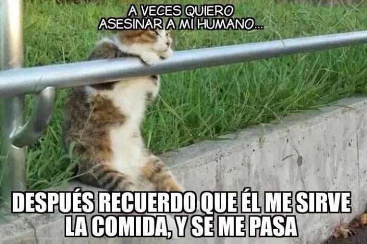 Marcianadas_172_1503271222 (62)