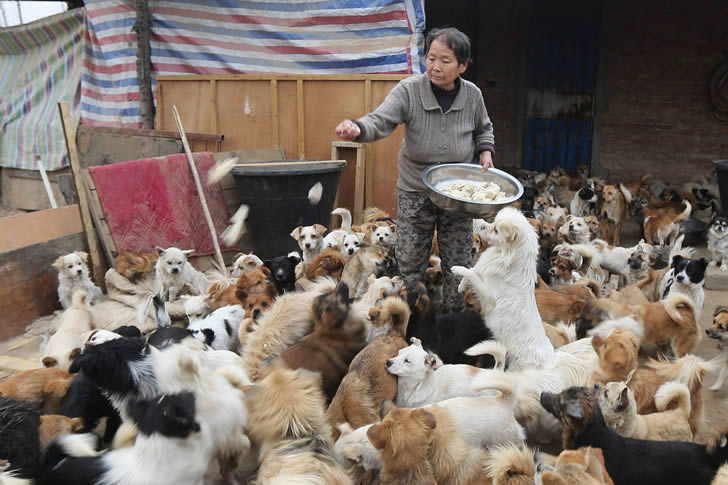 Wang Yanfang santuario perros china (1)