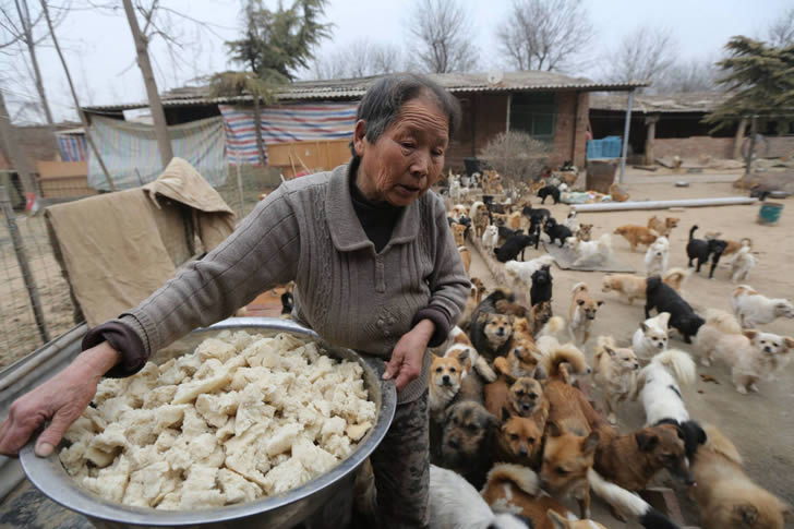 Wang Yanfang santuario perros china (2)