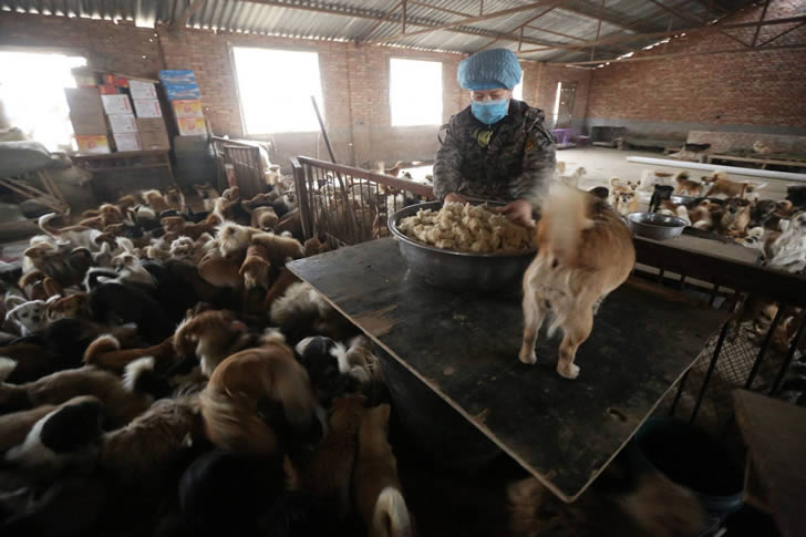 Wang Yanfang santuario perros china (3)