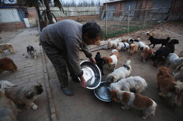 Wang Yanfang santuario perros china (4)
