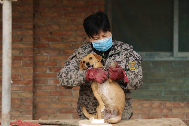 Wang Yanfang santuario perros china (5)