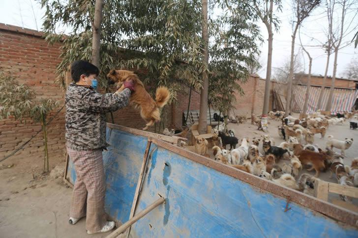 Wang Yanfang santuario perros china (6)