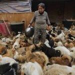 Abuelas chinas cuidan de 1,300 perros callejeros