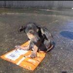 El inspirador rescate y recuperación de un cachorro llamado Jordan