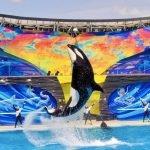 Ex entrenador de SeaWorld revela que las ballenas son drogadas a diario