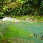¿Cómo sobrevivir perdido en la selva?