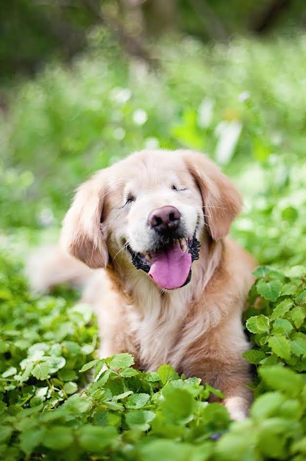 smiley perro ciego (1)