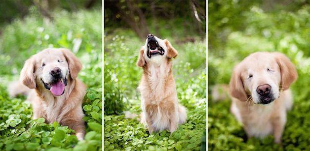 smiley perro ciego (10)
