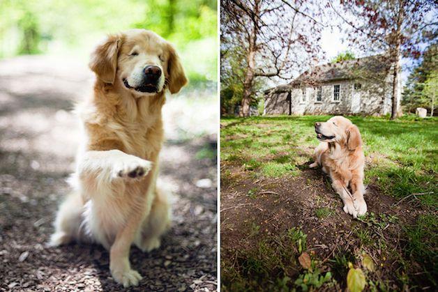 smiley perro ciego (2)
