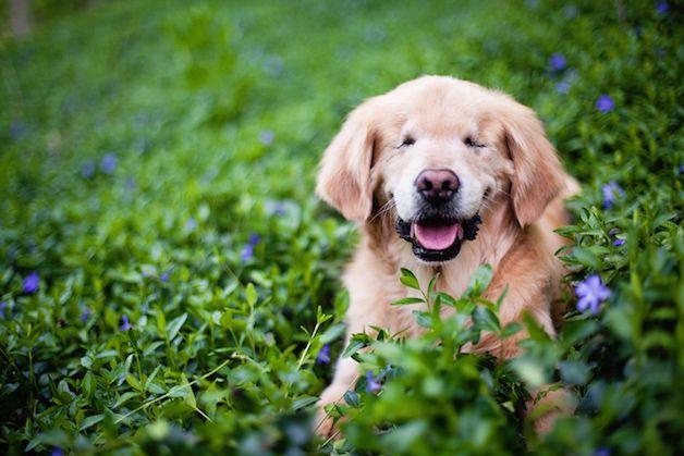 smiley perro ciego (3)