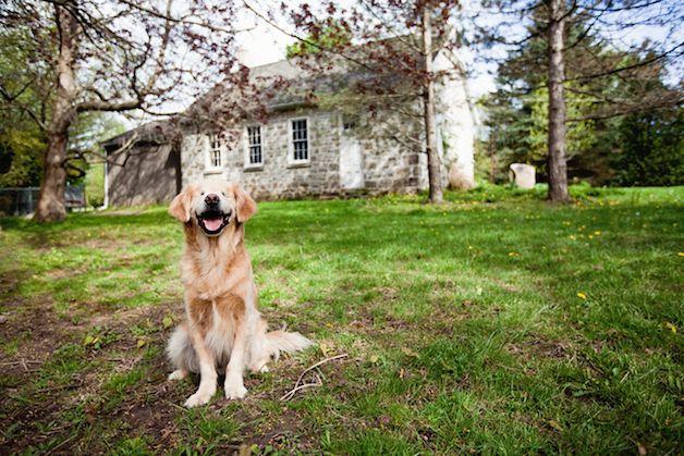 smiley perro ciego (6)
