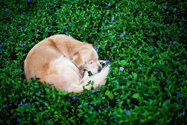 smiley perro ciego (7)