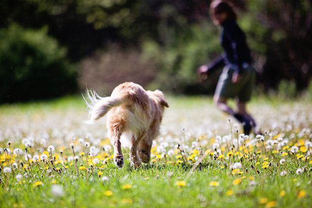 smiley perro ciego (8)