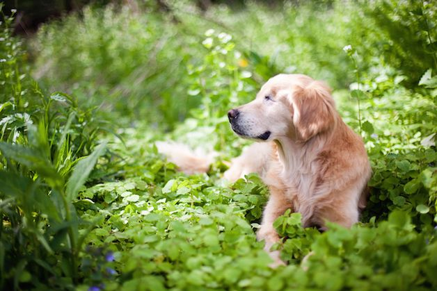 smiley perro ciego (9)