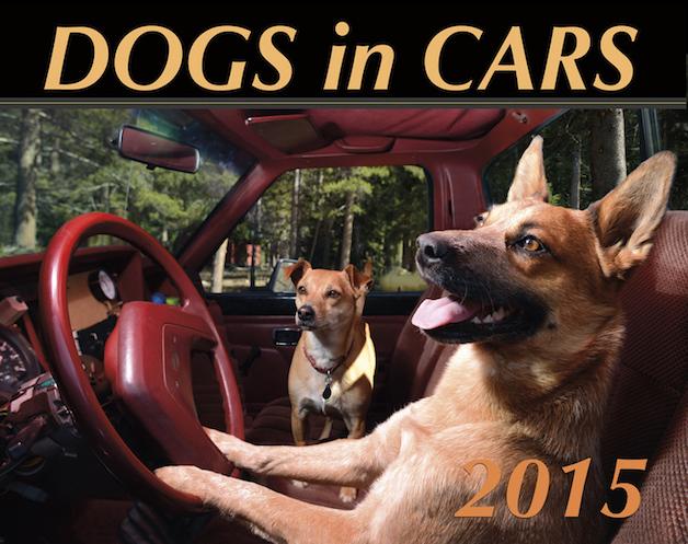Perros ventanas autos (1)
