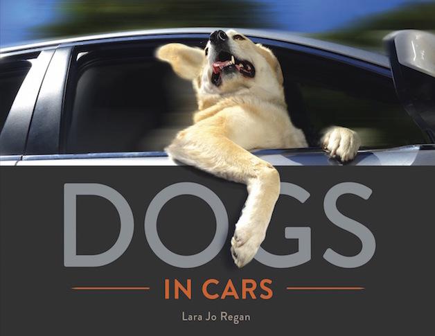 Perros ventanas autos (4)