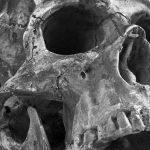 5 cadáveres humanos que rehúsan la descomposición