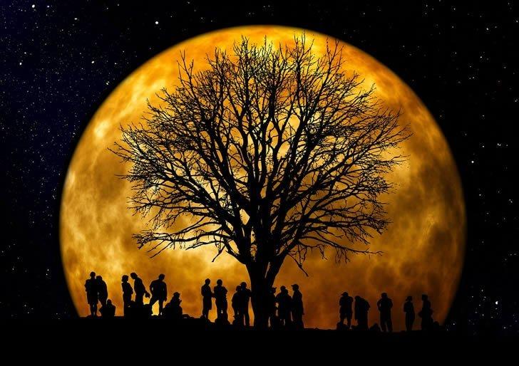 luna llena arbol