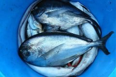 5 platillos inquietantes hechos con pescado