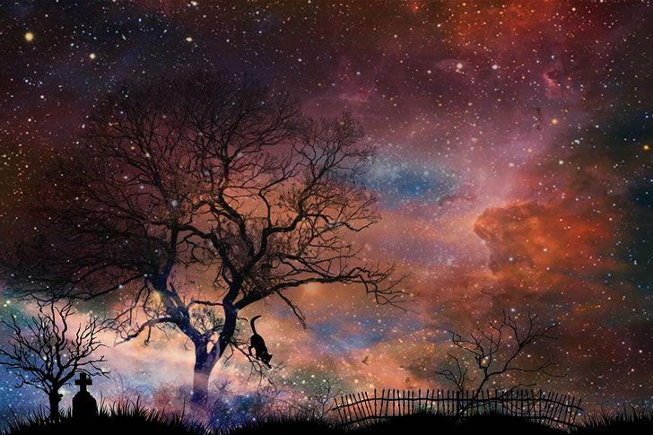 universo arbol