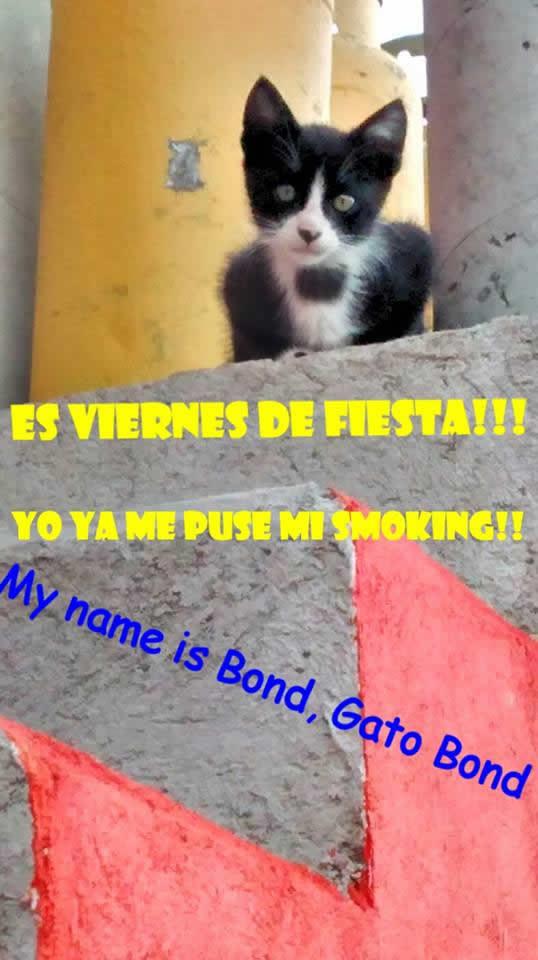 Marcianadas_181_290515 (222)