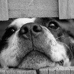 ¿Por qué los perros entierran los huesos?