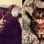 Extraña enfermedad deja a esta gata con los ojos de un extraterrestre