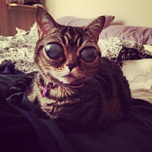 Matilda gata alien (10)