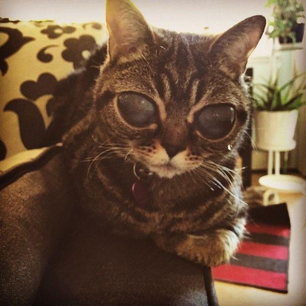 Matilda gata alien (11)