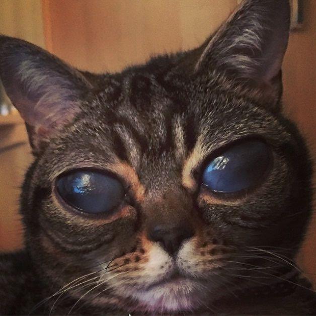 Matilda gata alien (4)